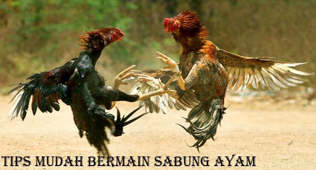 Tips Mudah Bermain Sabung Ayam